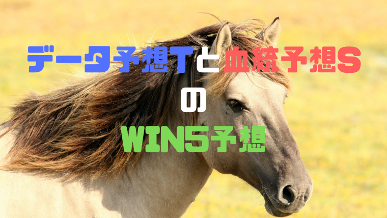 win5予想